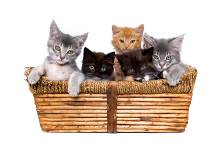 Kitten Cats Protection