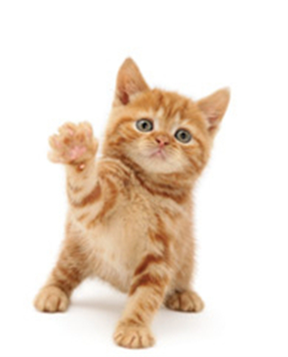 Waving kitten