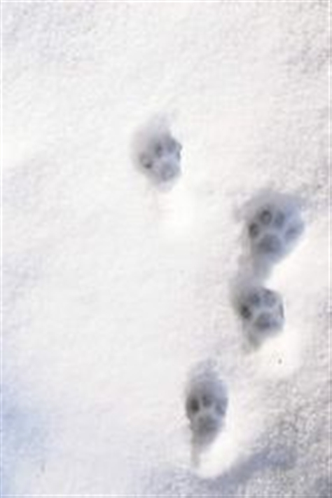 pawprints in the snow