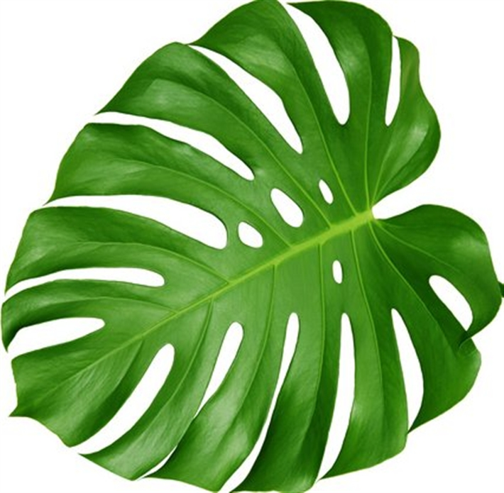 Plants - Big leaf indoor plants ...