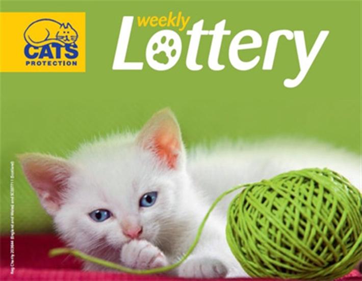 Weekly Lottery kitten