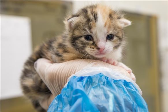 Kitten at 2 wks